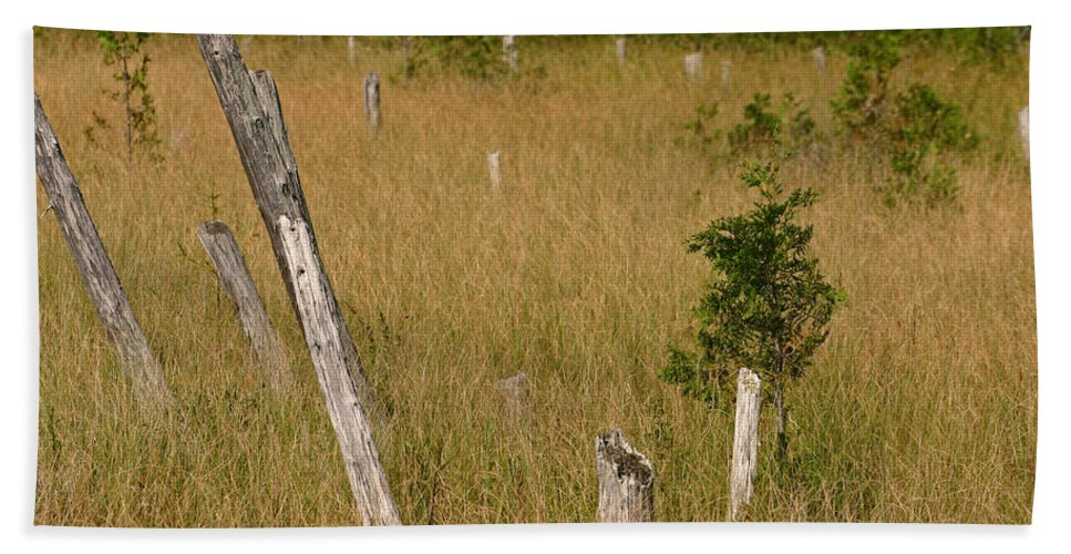 Maine Hand Towel featuring the photograph A Marsh In Maine by David Rucker