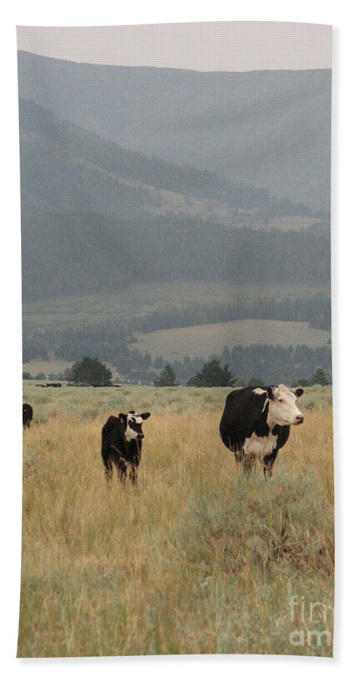 Cow Hand Towel featuring the photograph A Montana Memory by Stacey May