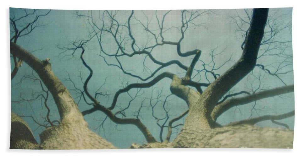 Trees Bath Sheet featuring the photograph A Naked Tree by Jeffery L Bowers