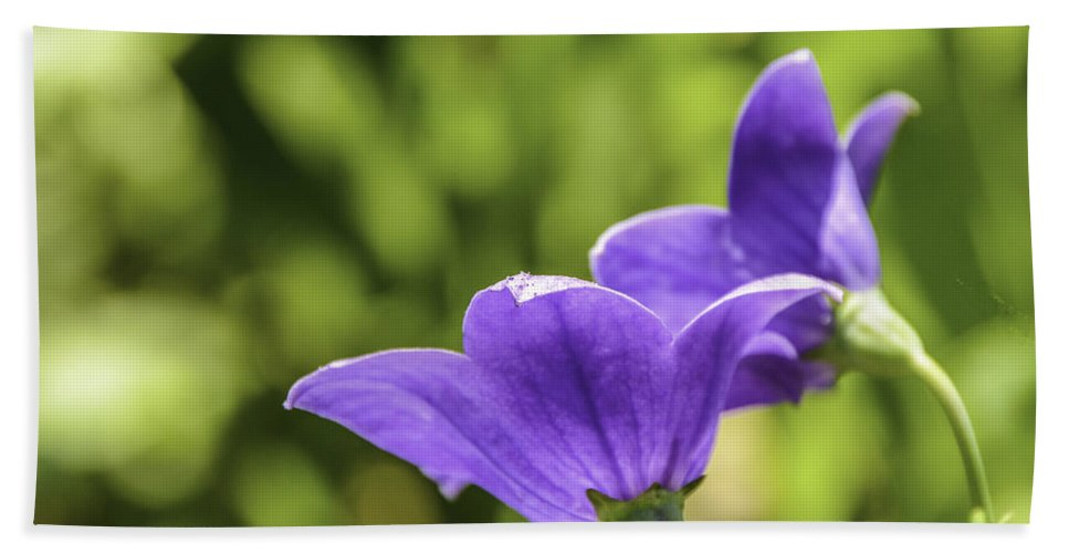 Background Hand Towel featuring the photograph A Pair Of Purple Balloon Flowers by Mary Carol Story