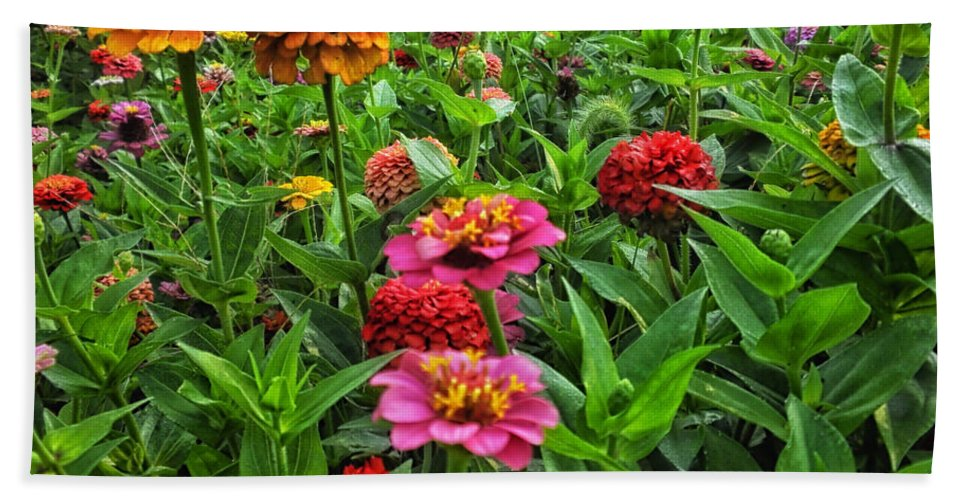 Floral Bath Sheet featuring the photograph A Pair Of Yellow Zinnias 02 by Thomas Woolworth