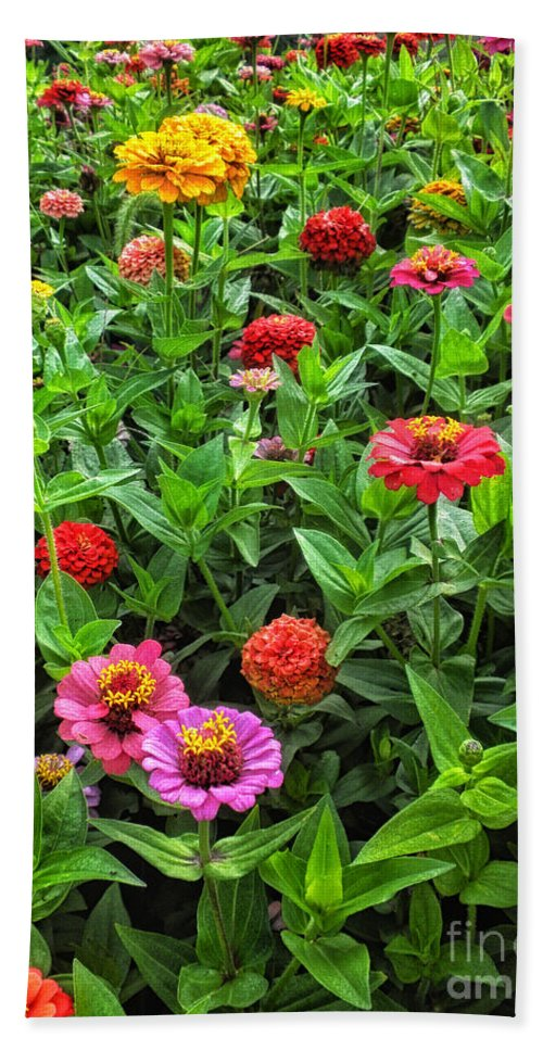 Floral Bath Sheet featuring the photograph A Pair Of Yellow Zinnias 04 by Thomas Woolworth