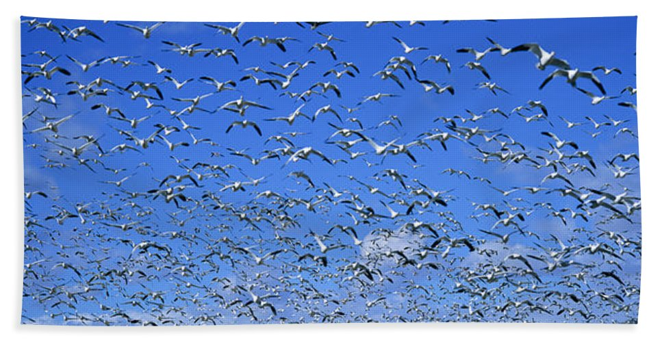 Photography Hand Towel featuring the photograph A Panoramic Of Thousands Of Migrating by Panoramic Images