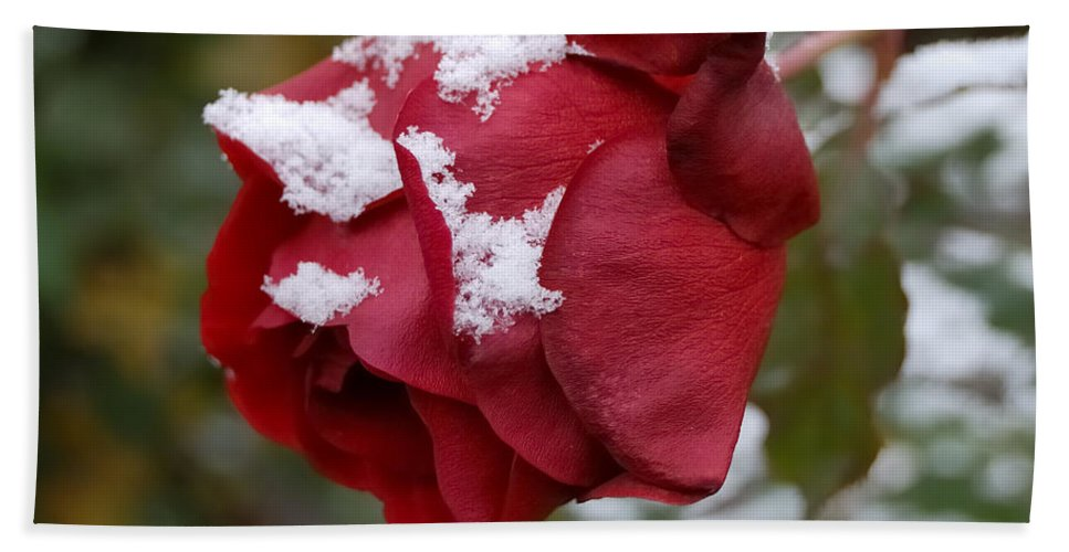 Roses Hand Towel featuring the photograph A Passing Unrequited - Rose In Winter by Steven Milner