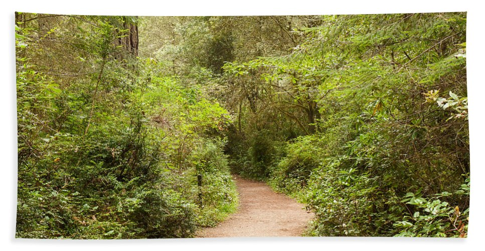 Landscape Hand Towel featuring the photograph A Path To The Redwoods by John M Bailey