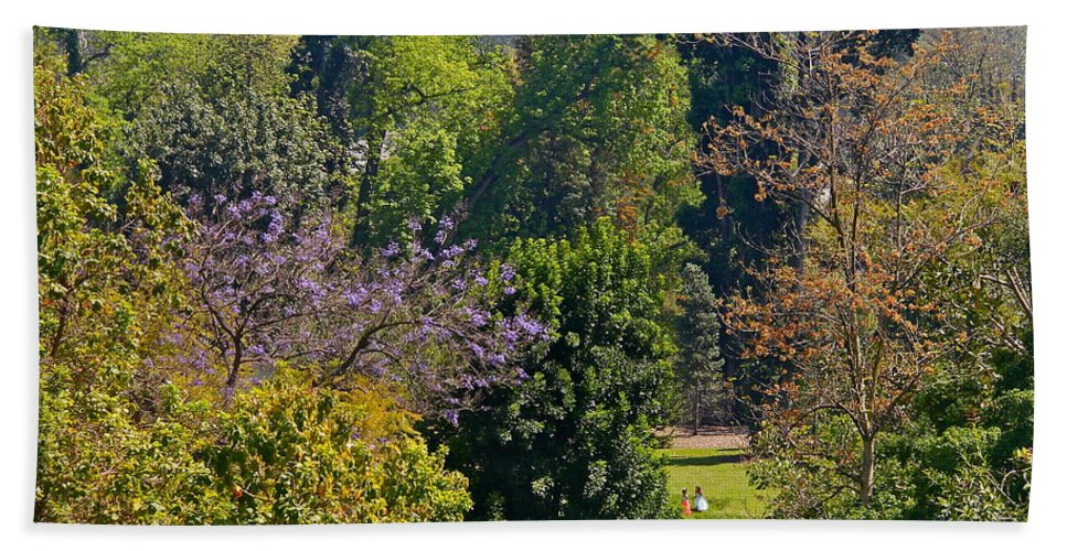 Tree Hand Towel featuring the photograph A Peek Through The Trees by Denise Mazzocco
