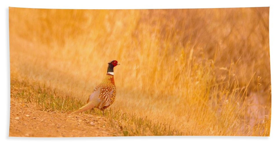 Bath Sheet featuring the photograph A Pheasant by Jeff Swan