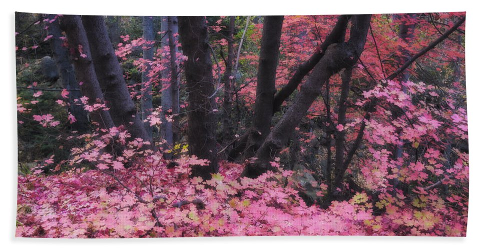 Pink Maple Tree Bath Sheet featuring the photograph A Pink Autumn by Saija Lehtonen