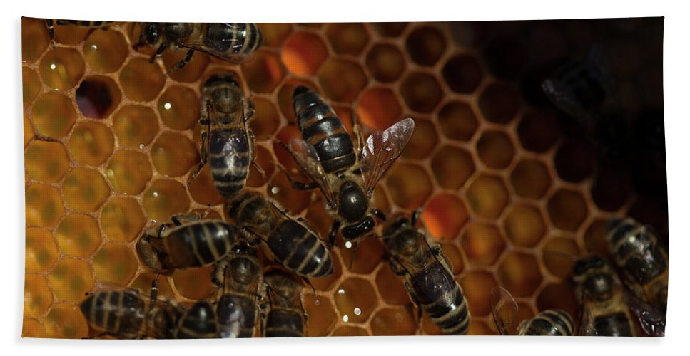 Worker Bees Bath Towel featuring the photograph A Queen Bee Walks In The Center by Chico Sanchez