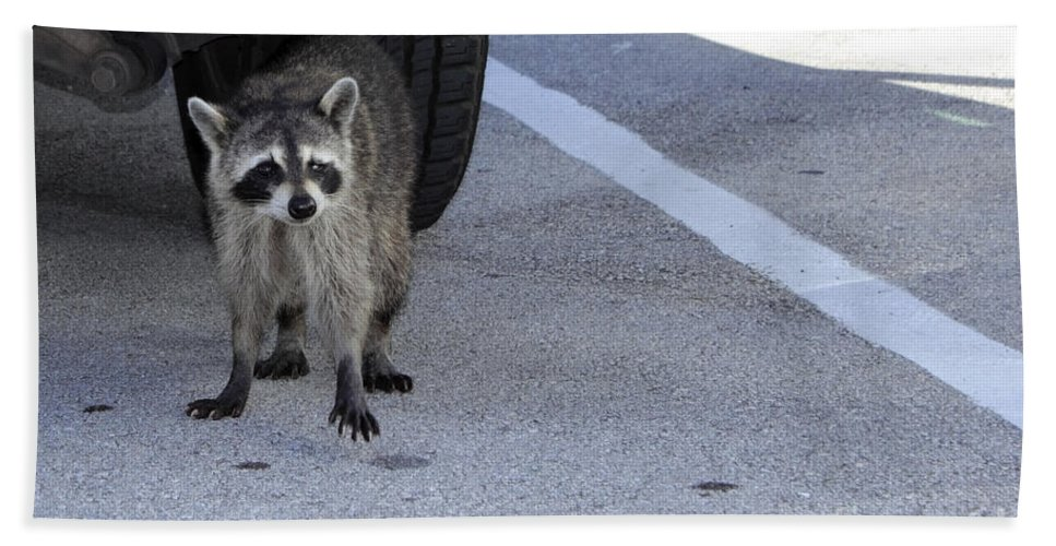 Raccoon Bath Sheet featuring the photograph A Raccoon In Florida by Lee Serenethos