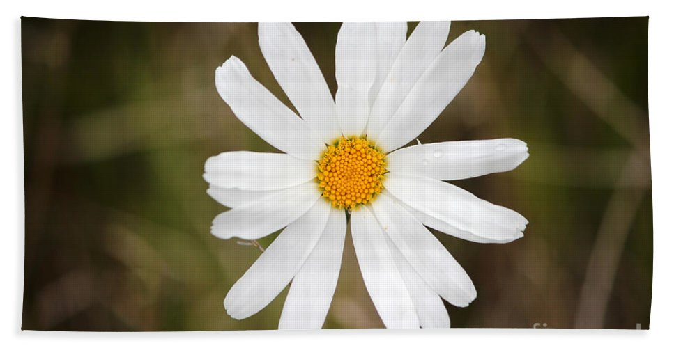 Daisy Hand Towel featuring the photograph A Rain Spattered Daisy by Stacey May