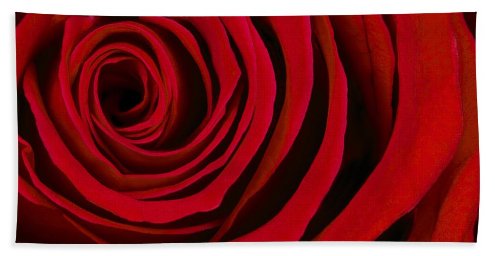 3scape Photos Bath Towel featuring the photograph A Rose for Valentine's Day by Adam Romanowicz
