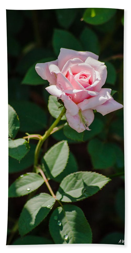Dallas Hand Towel featuring the photograph A Rose Is A Rose by Allen Sheffield