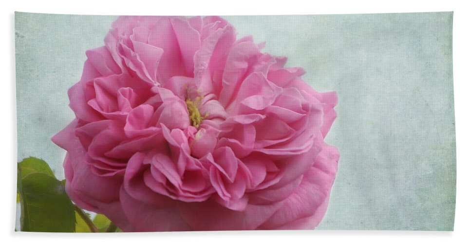 Pink Rose Hand Towel featuring the photograph A Rose by Kim Hojnacki
