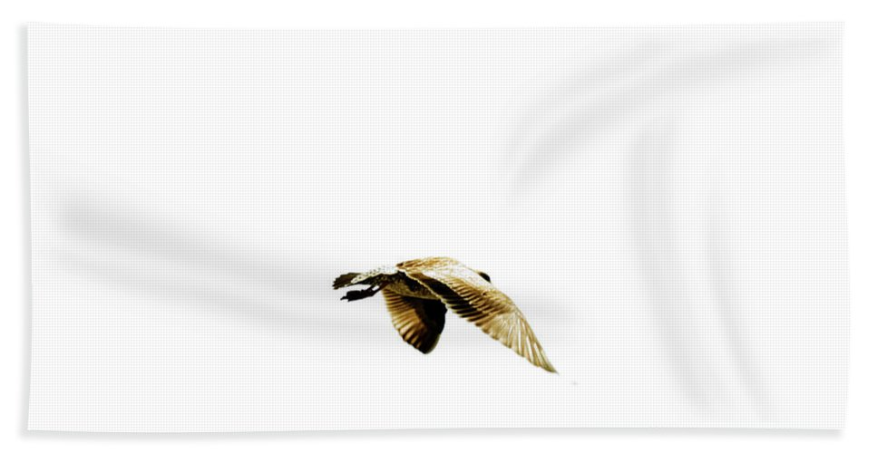 Animal Bath Sheet featuring the photograph A Seagull In Flight Over The Open Ocean by Elyse Butler