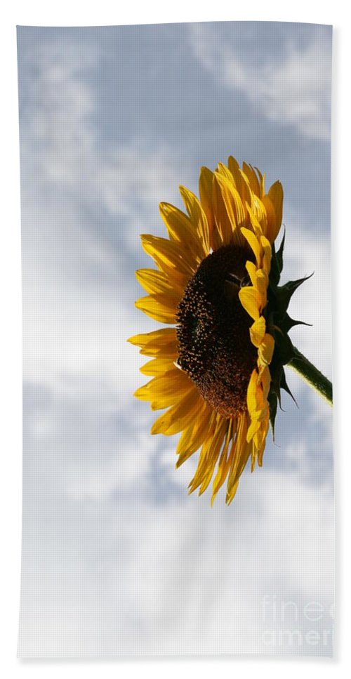Yellow Sunflower Photography Bath Sheet featuring the photograph A Side Of Sunflower by Neal Eslinger