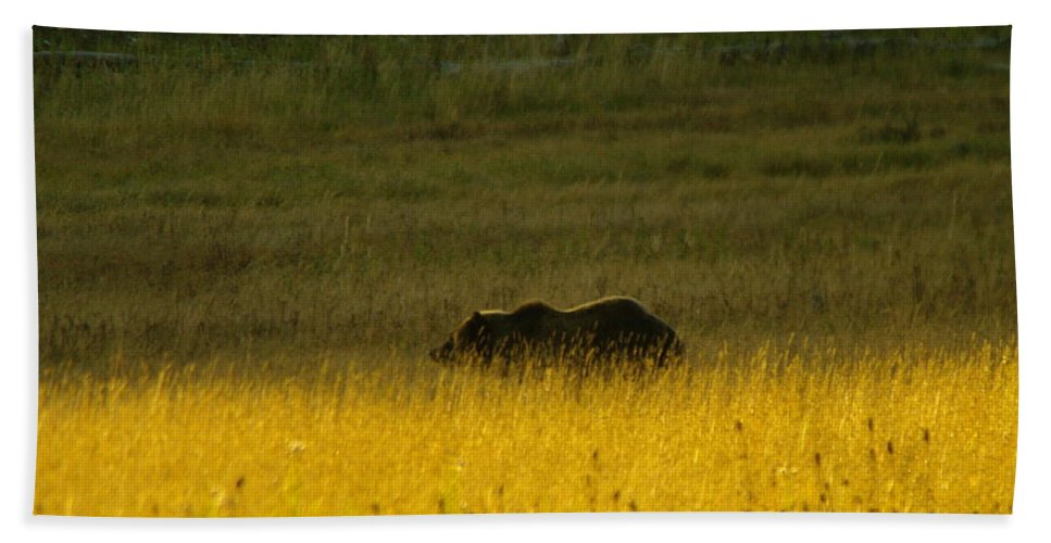 Bears Bath Sheet featuring the photograph A Silver Back by Jeff Swan