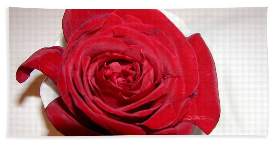 Rose Hand Towel featuring the photograph A Single Red Rose by Jussta Jussta