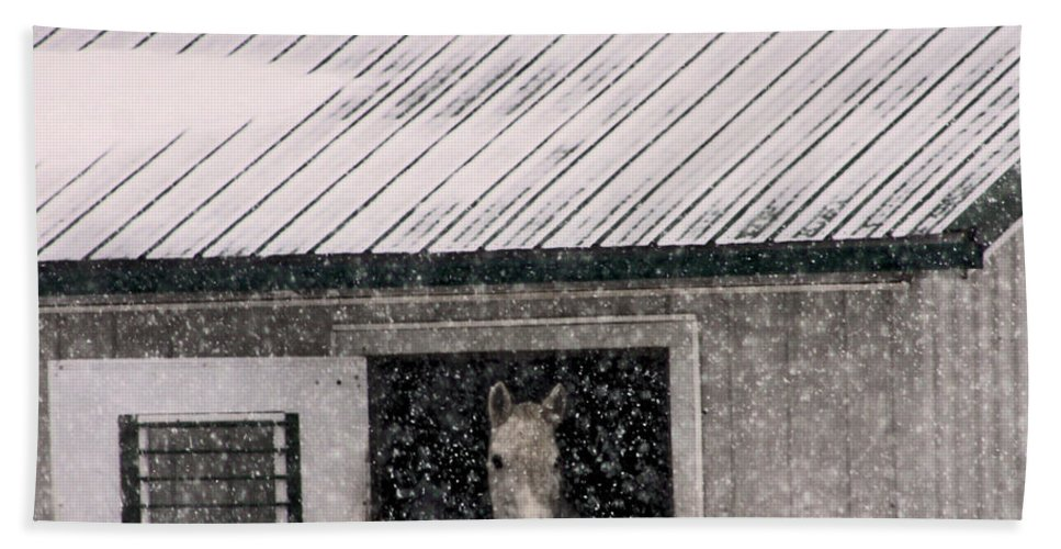 Horse Hand Towel featuring the photograph A Snowfall At The Stable by Bruce Patrick Smith