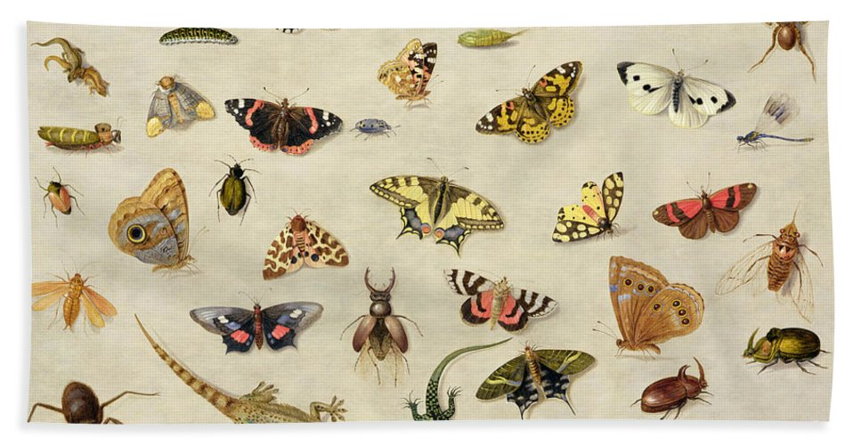 Collection Bath Towel featuring the painting A Study Of Insects by Jan Van Kessel