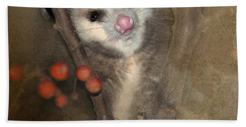 Opossum Hand Towel featuring the photograph A Thief In The Night by Betty LaRue