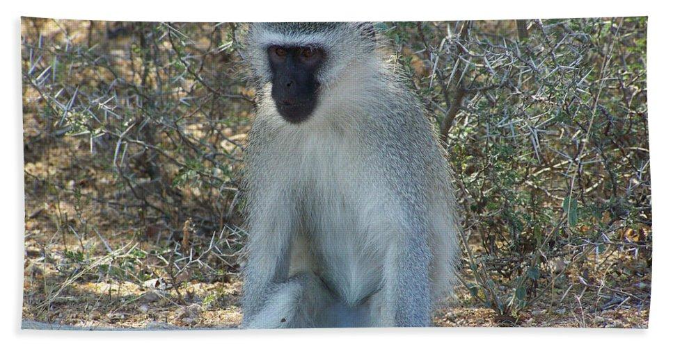 Vervet Monkey Bath Sheet featuring the photograph A Time To Relax by Douglas Barnard