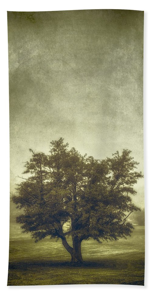 Tree Bath Towel featuring the photograph A Tree In The Fog 2 by Scott Norris