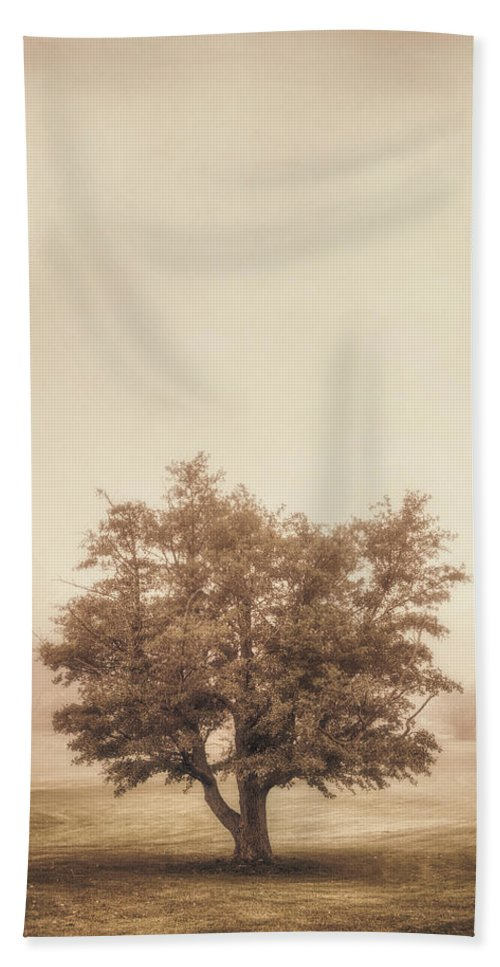Tree Hand Towel featuring the photograph A Tree In The Fog by Scott Norris
