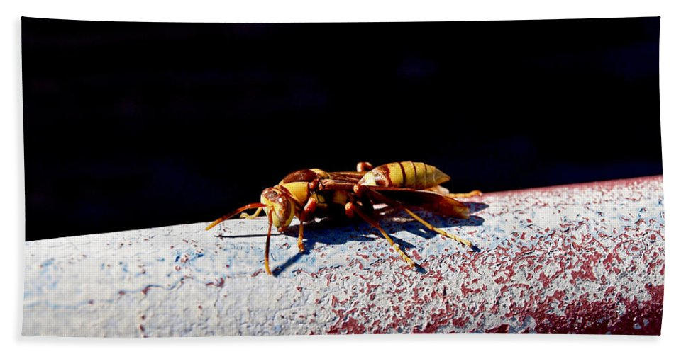 America Hand Towel featuring the photograph A Vespid Wasp by Howard Stapleton