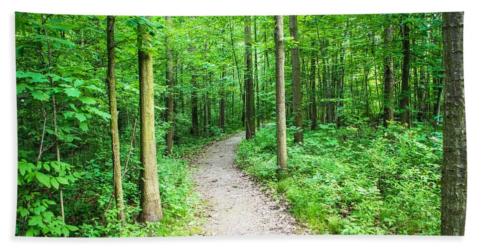 Greig Park Hand Towel featuring the photograph A Walk In The Woods by Grace Grogan