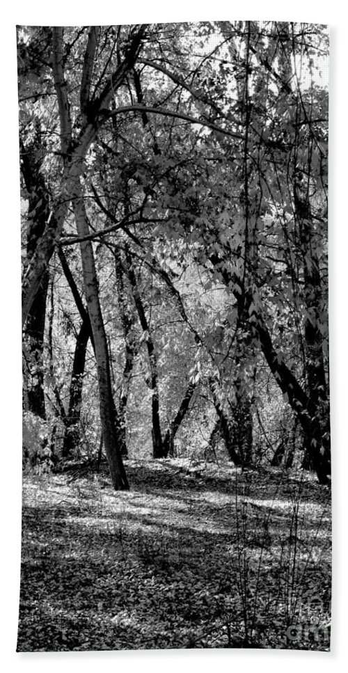 Photograph Bath Sheet featuring the photograph A Walk In The Woods by Vicki Pelham