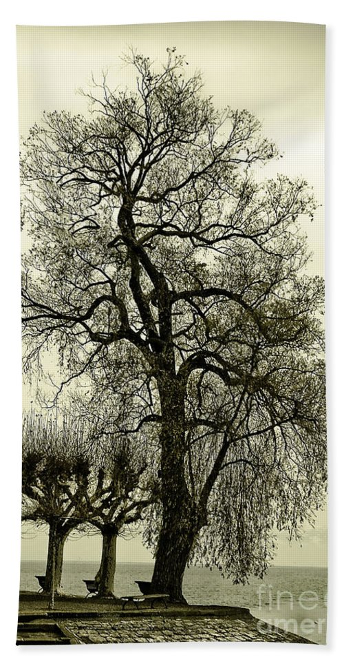 Tree Bath Sheet featuring the photograph A Winter Touch by Syed Aqueel