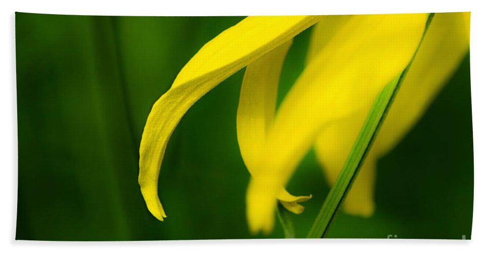 Flower Hand Towel featuring the photograph A Woman Passes By by Michael Arend