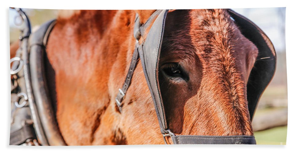 Mule Hand Towel featuring the photograph A Working Fella by Lynn Sprowl