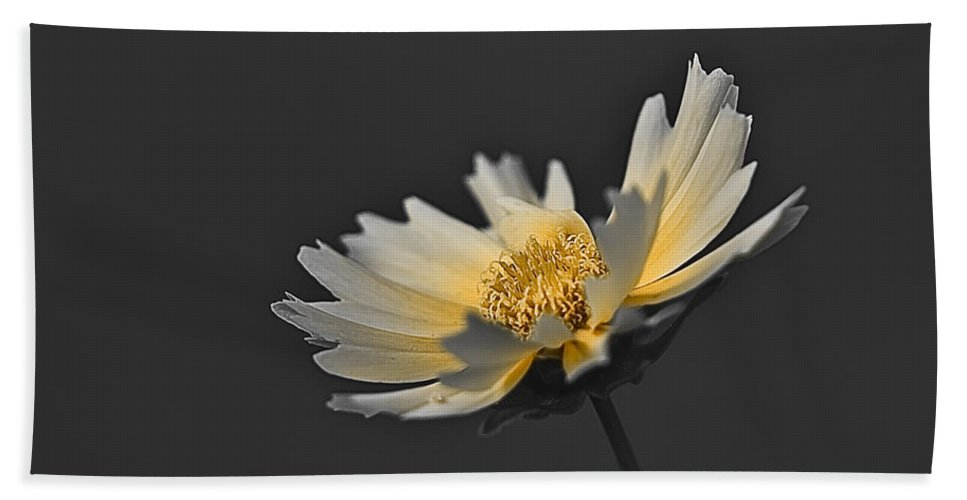 Selective Color Hand Towel featuring the photograph A Yellow Glow by Samantha Eisenhauer