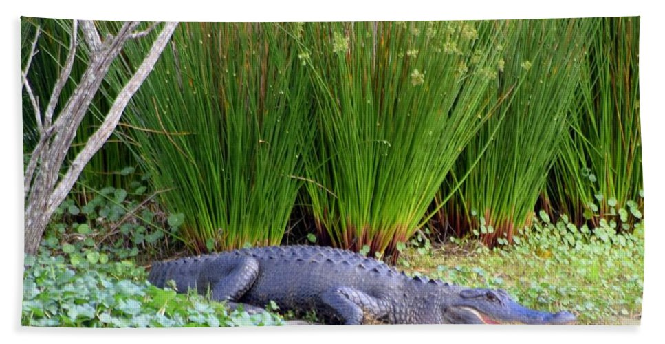 Alligator Bath Sheet featuring the photograph Aahh Spring Break by Sheri McLeroy