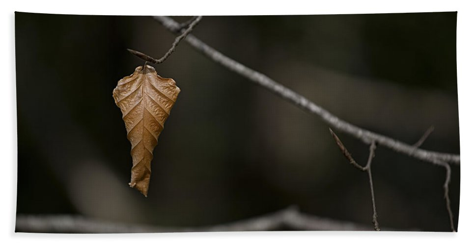Leaf Bath Sheet featuring the photograph About To Drop. by Nigel R Bell