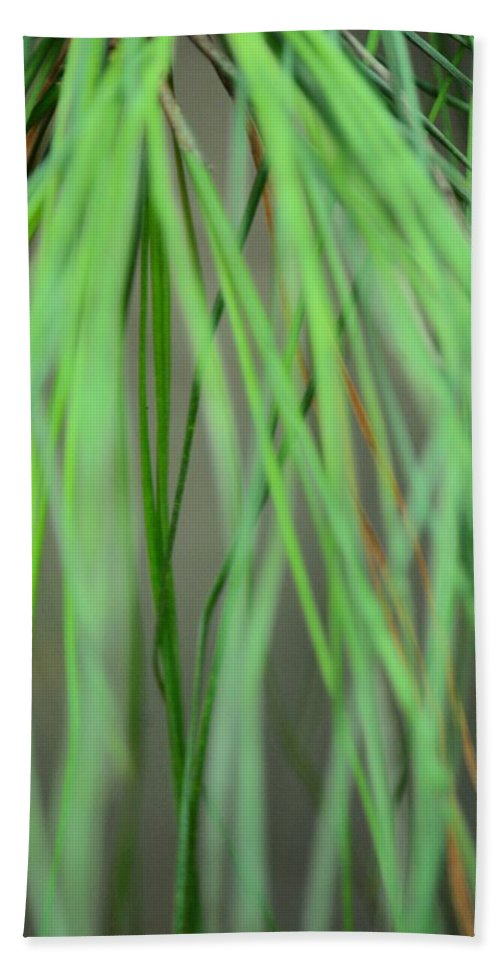 Abstract Green Pine Hand Towel featuring the photograph Abstract Green Pine by Maria Urso