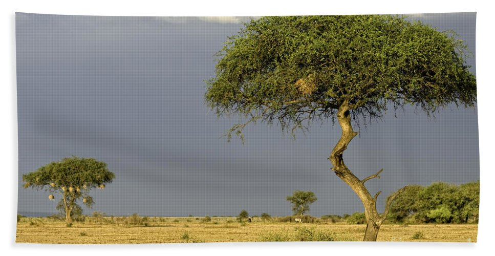 Africa Bath Sheet featuring the photograph Acacia Trees On Serengeti by Timothy Hacker