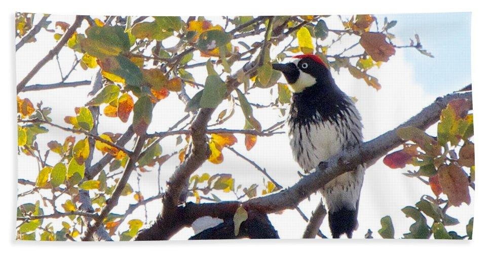 Acorn Woodpecker In Tree In Park Sierra Bath Sheet featuring the photograph Acorn Woodpecker In Tree In Park Sierra-ca by Ruth Hager