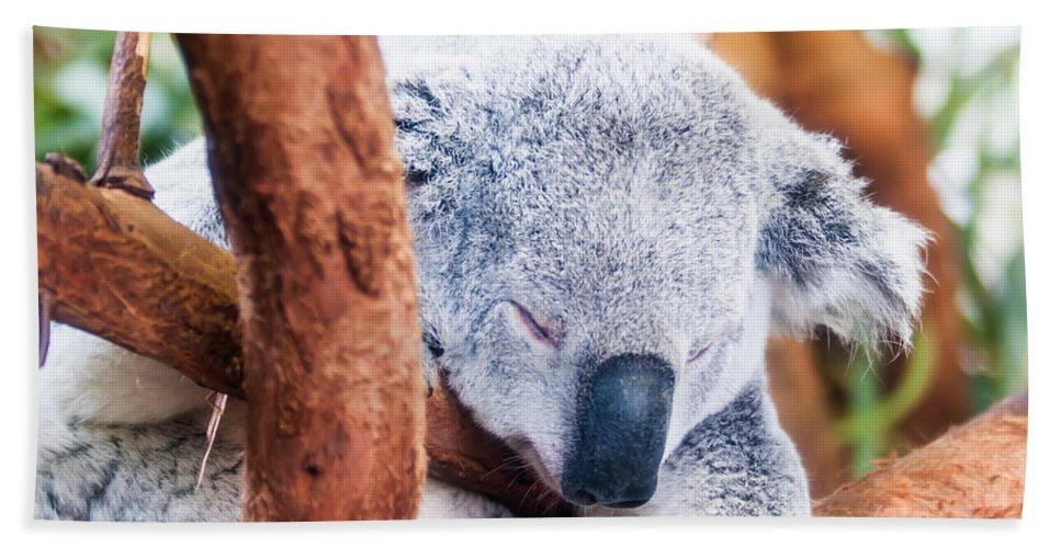 Koala Hand Towel featuring the photograph Adorable Koala Bear Taking A Nap Sleeping On A Tree by Alex Grichenko