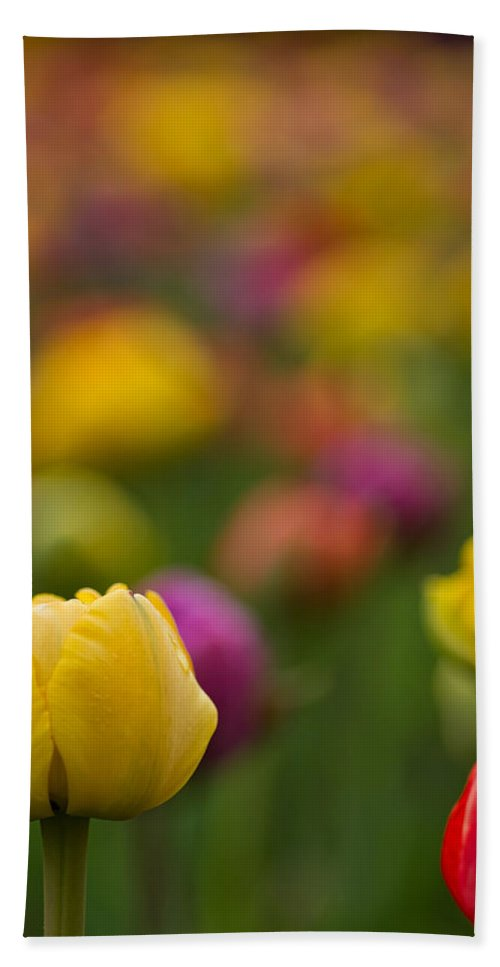 Tulips Hand Towel featuring the photograph Advent Of Spring by Lindley Johnson