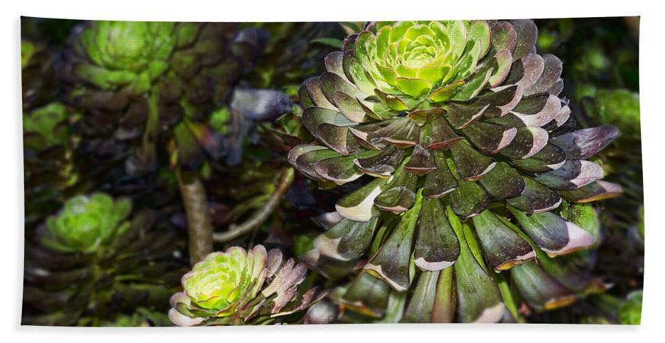 Aeonium Hand Towel featuring the photograph Aeonium Glow by Kelley King