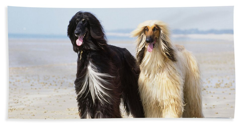 Afghan Hound Bath Sheet featuring the photograph Afghan Hound Dogs by John Daniels