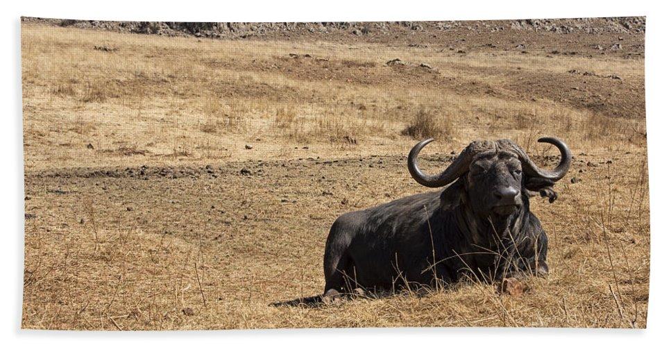 African Buffalo Hand Towel featuring the photograph African Buffalo V2 by Douglas Barnard