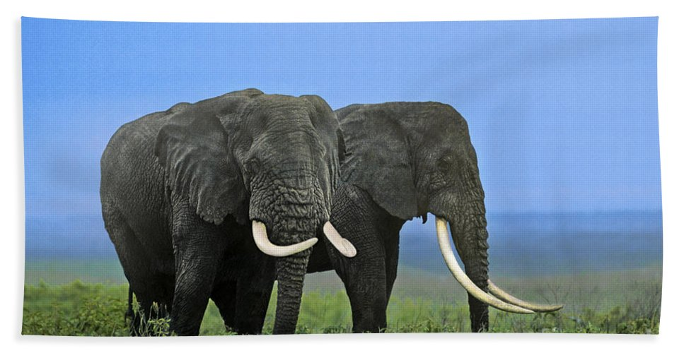 Africa Hand Towel featuring the photograph African Bull Elephants In Rain Endangered Species Tanzania by Dave Welling
