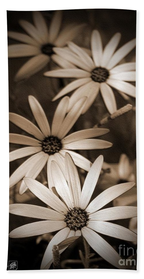 Osteospermum Bath Sheet featuring the photograph African Daisy Named African Sun by J McCombie