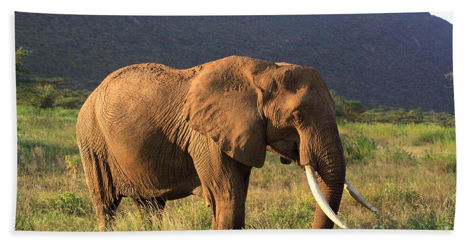 Africa Bath Sheet featuring the photograph African Elephant by Deborah Benbrook