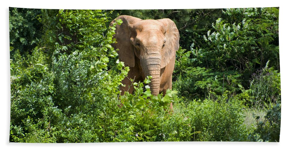 African Elephant Hand Towel featuring the digital art African Elephant Eating In The Shrubs by Chris Flees