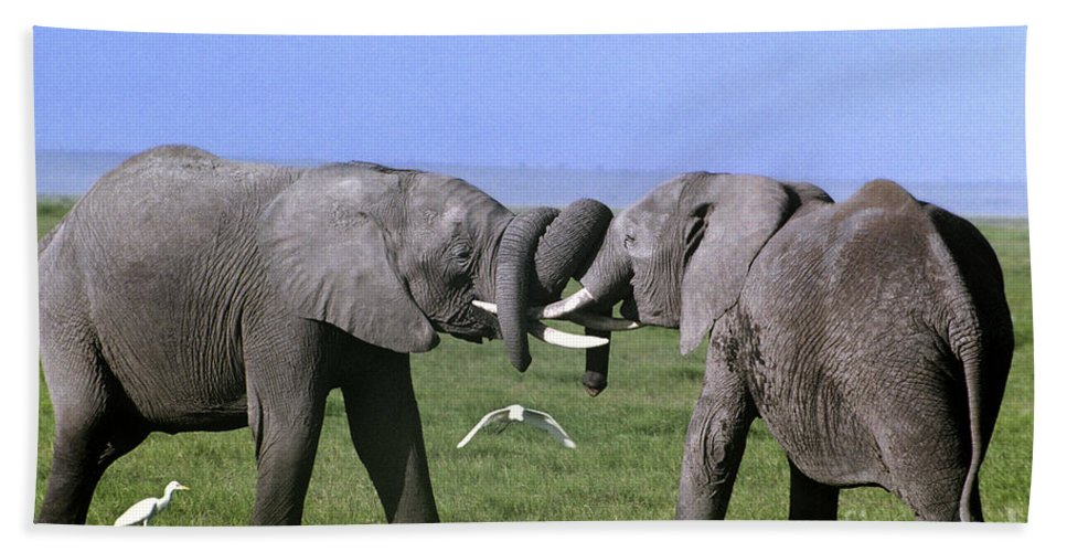 Africa Bath Towel featuring the photograph African Elephant Greeting Endangered Species Tanzania by Dave Welling